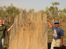 Magnetic termite mounds, Top End nature tours