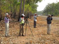 birdwatching tours in Kakadu National Park