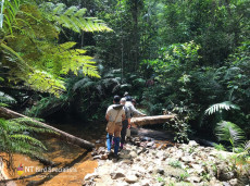 Trekking in Sinharaja Forest for the 'bird wave'